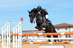 horse-721136_1920