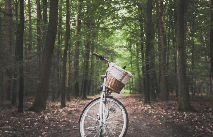 Cykel holder parkeret i en skov